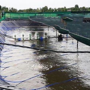 bạt HDPE lót hồ tôm ao tôm nuôi trồng thủy